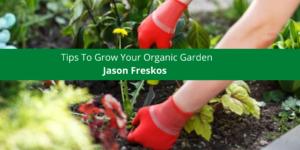 Jason Freskos Offers Tips To Grow Your Organic Garden
